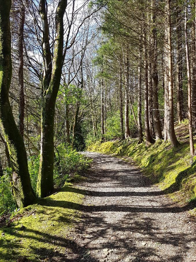 Woodland Walks Collection by Eibhilin Crossan
